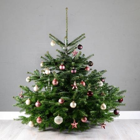 TANTE TANNE Weihnachtsbaum Weihnachten Nordmanntanne