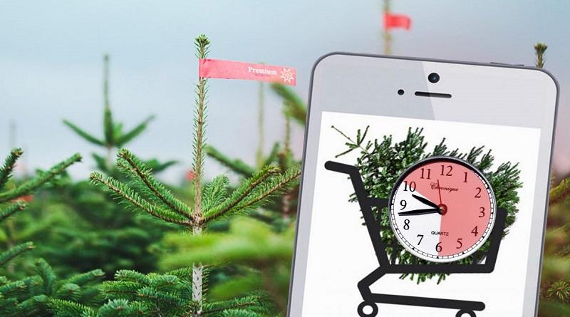 Meine Tanne Weihnachtsbaum