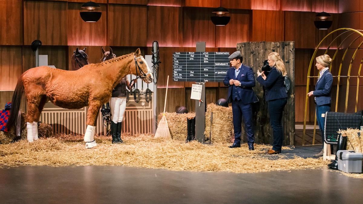 Die Pferde App DHDL