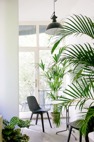 Bosque nachhaltig Pflanzen Topf pflanze