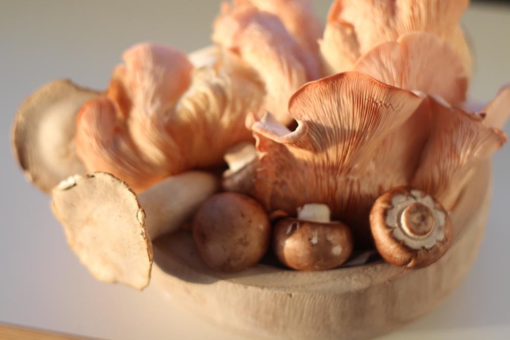 pilzliebe: Edelpilzzucht auf Kaffeesatz für frische, regionale Pilze