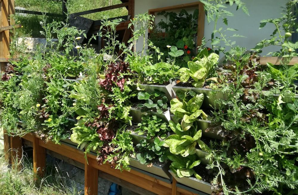 Herbios multifunktionale Vertikalbeete für essbare Gärten